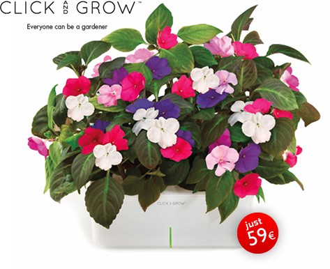 Click And Grow. The Flower Pot For Lazy Gardeners
